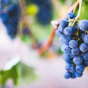 Vin og matglede